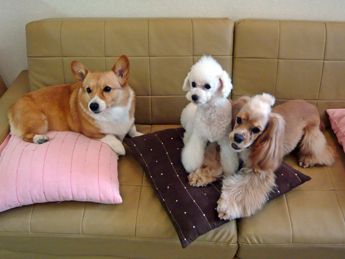 doghug6お店のワンちゃん